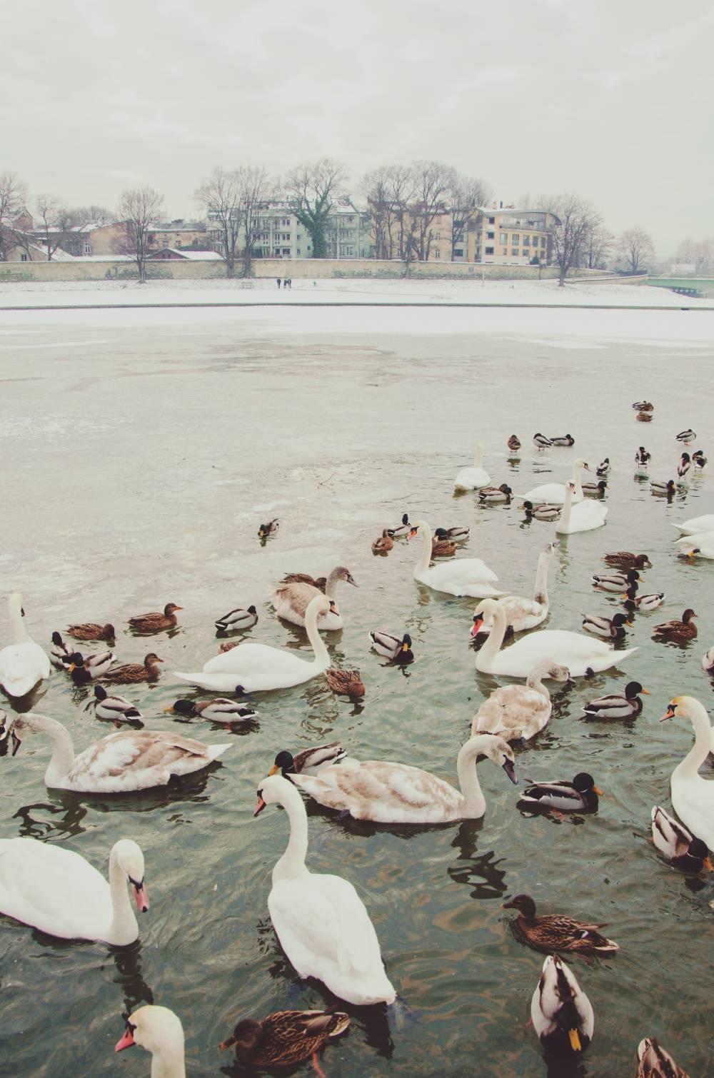 Avrupa'da Gezilecek Yerler 5 – Krakow