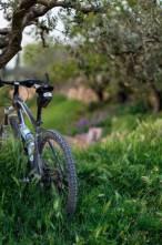 Kadim Lezzet: Zeytinyağı Nasıl Yapılır?